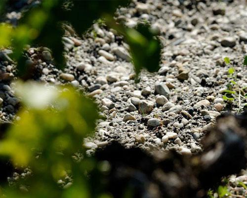 vigne-grave-500