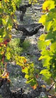 vigne-terroir-230